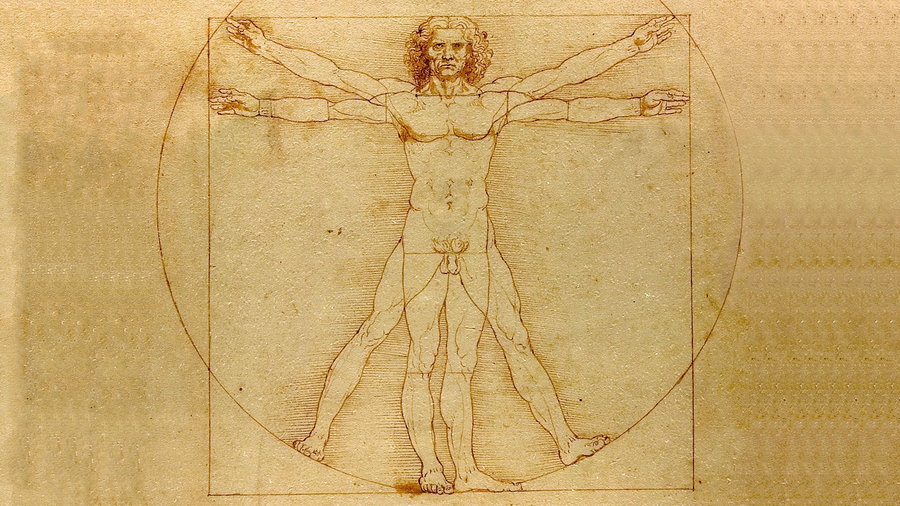 virtruvian man muscle